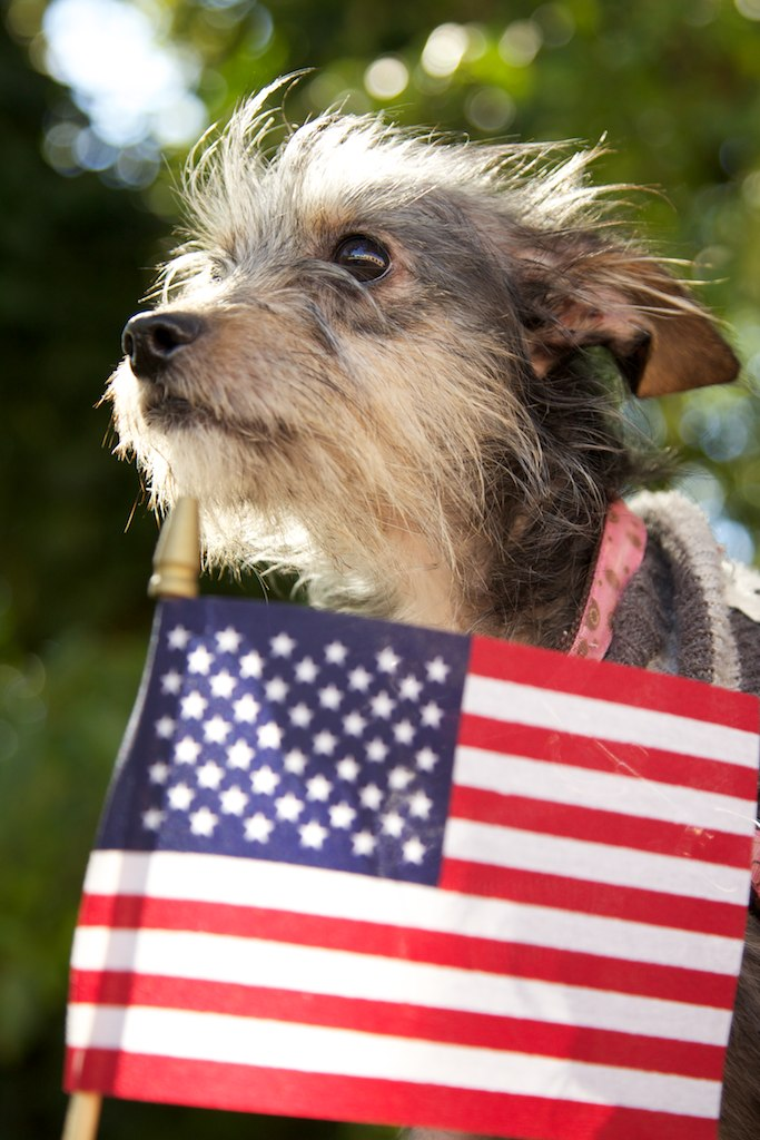 "LifeLine Animal Project Honors Military Service with ""Pets for Vets"""