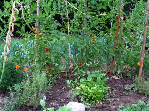 gemma garden